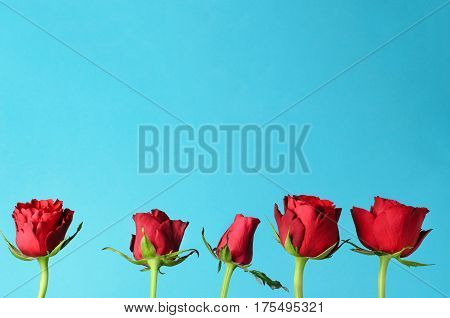 Five individual red roses lined up in an upright row against a light bright blue background with copy space.