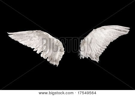 two wings isolated on black background