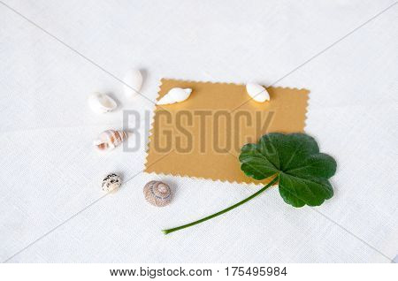 Gold Plate, Seashells And Green Leaf On A Light Background