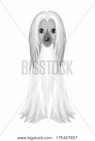 Afghan Hound. Vector image of a cute purebred dogs in cartoon style.