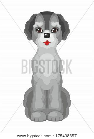labradoodle . Vector image of a cute purebred dogs in cartoon style.