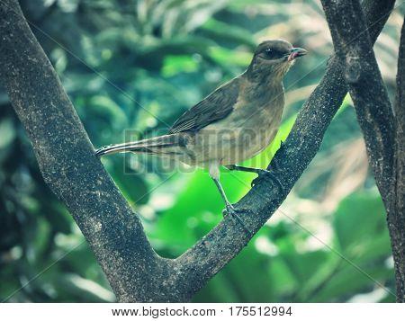 pajaro, ave, tortola, arbol, paisaje, naturaleza, animales, comiendo, cazando