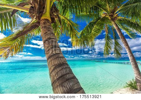 Beach with palm trees on the north side of tropical Moorea island, French Polynesia