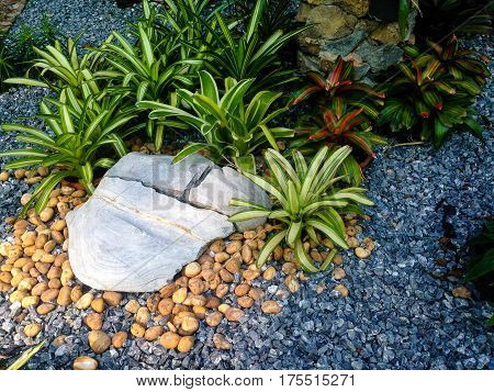 The garden decoration by rock and plant.