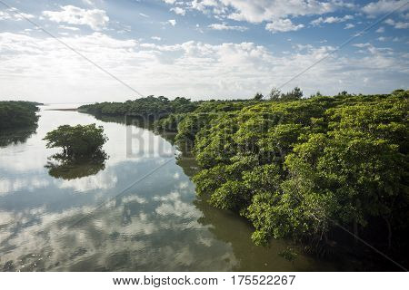 Morning Miyara river beside mangrove under sky in Ishigaki island