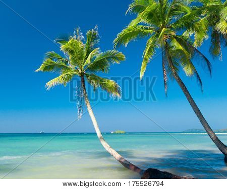 Green Getaway Beautiful Beach