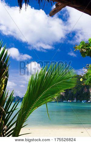 Idyllic Coast Coconut Getaway
