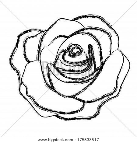 figure rose with its petal icon, vector illustraction design