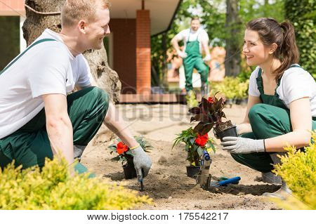 Male And Female Gardeners Planting Flowers