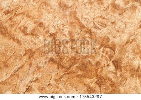 Wood Texture Of The Karelian Birch