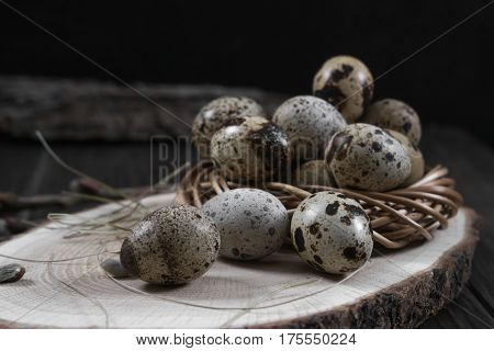 Easter composition with quail eggs and twigs of willow blossom. Nest with quail eggs, Easter concept