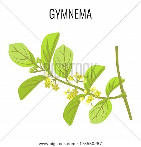 Gymnema ayurvedic medicinal herb isolated on white background. Realistic vector illustration of woody climbing shrub. Leaves are used to make medicine, destroyer of sugar
