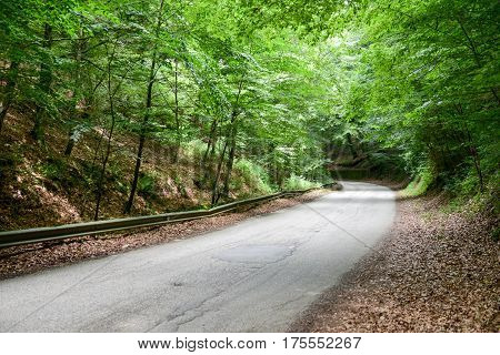 Street on Umbra Forest at Gargano Italy