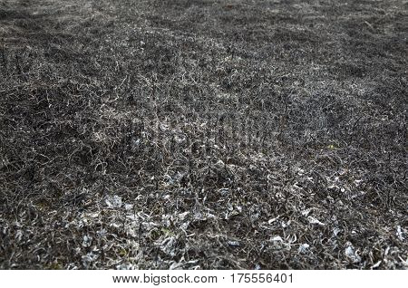 Burnt grass in the field after the big fire. Close up.