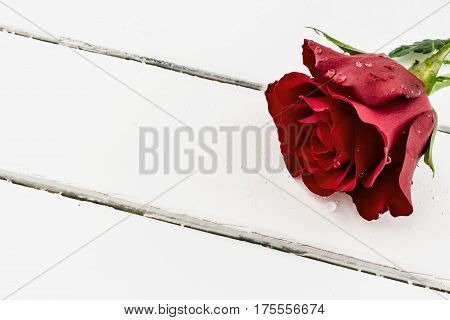 Red rose with water drops on white wood