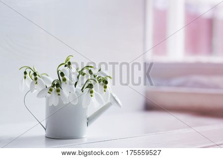 Beautiful White Snowdrops In Little Watering Can On White Background Near Window