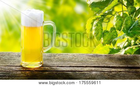 Draught beer on wooden table in front of hop plants