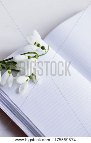 Beautiful White Snowdrops With Open Notebook On White Background