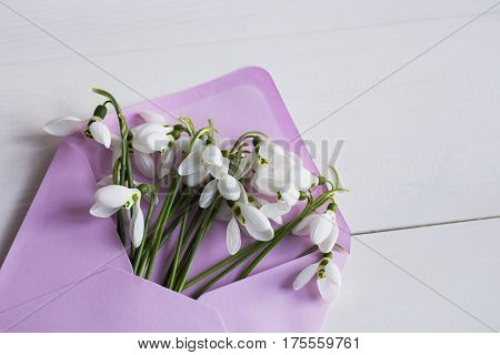 Beautiful Tender Snowdrops In Envelope On White Wooden Background