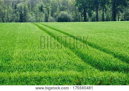 Beautiful Green fields on a spring time in Co. Kildare Ireland