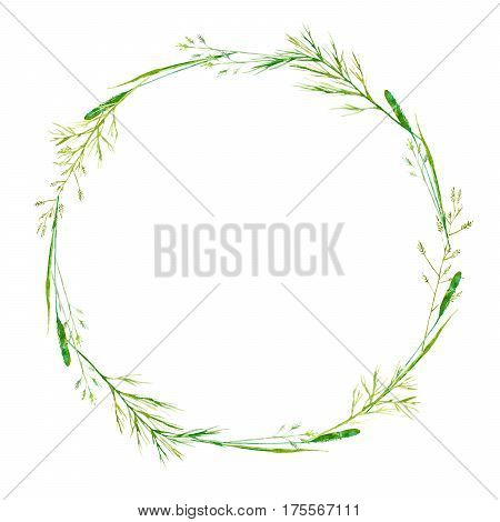 Wreath of a meadow herbs. Garland of a spike and timothy grass. Watercolor hand drawn illustration.