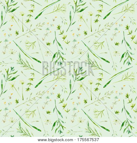 Floral seamless pattern of a meadow herbs and flowers. Packaging of a spike and timothy grass. Watercolor hand drawn illustration.Green background.