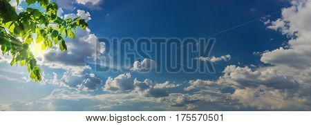Sky panorama with the cumulus clouds and sun rays from behind the branches of the hornbeam and clouds in the left side