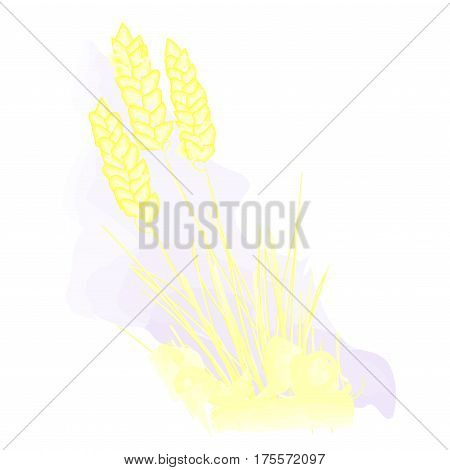 Grain stylized watercolor. Agriculture. Wheat, oats, barley. Three spikelet on a white background