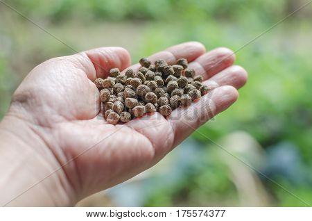 Fish food pellets in hand close-up.  carp, child, closeup