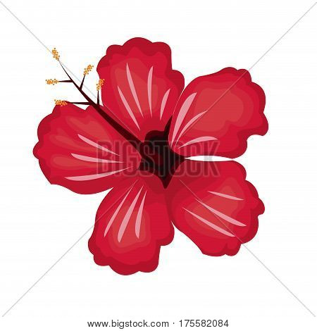 hibiscus flower exotic nature vector illustration eps 10