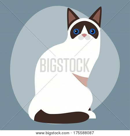 Cat breed siamese cute pet portrait fluffy white black adorable cartoon animal and pretty fun play feline sitting mammal domestic kitty vector illustration. Beautiful posing playful paw design.