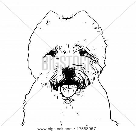 Cute West Highland White terrier black and white illustration drawing