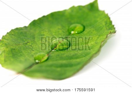 Green leaf isolated on the white background