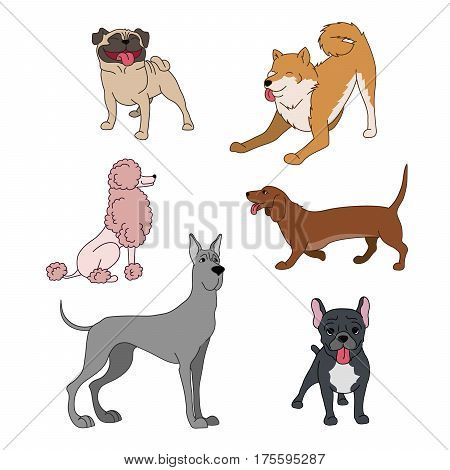 Dogs Breeds Cartoon Set Great Dane, French Bulldog, Poodle, Husky, Dachshund, Pug On White Vector Co