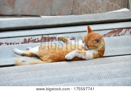 Cat rest on city street at summer