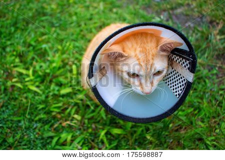 Red cat in medical collar. Domestic pet after surgery in veterinarian clinic. Cute sad kitty in protective cover on neck. Depressed cat patient. Vet care of unhealthy animal. Feline healthcare concept