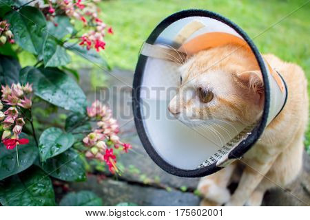 Lovely cat in protective cover on head. Injured cat after the surgery operation. Sad unhealthy kitten in garden. Medical care of domestic animal. Pet wearing plastic collar on neck. Vet clinic banner