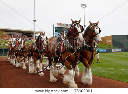 SCOTTSDALE, AZ-MAR 6: Clydesdales before the game between the Arizona Diamondbacks and the Oakland Athletics at Salt River Fields on March 6, 2014 at Talking Stick in Scottsdale, Arizona.