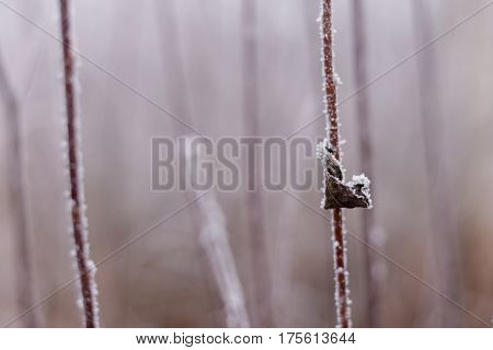 Bush branches with withered leaf covered by hoarfrost on a background of frosted branches or bushes, winter background, abstract, natural pattern