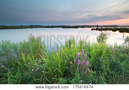 wildflowers by lake at sunset in summer