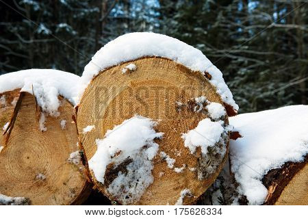 Details of Trunks of large pine trees prepared for export in the winter season. Stacked in stacks of sawn forest covered with snow. Industrial logging of pine trees. Nature is used by people.