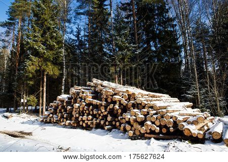 Trunk of pine trees prepared for export in the winter season. Stacked in stacks of sawn forest covered with snow. Industrial logging of pine trees. Nature is used by people.