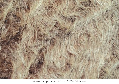 Texture of faux fur with long pile. Blank background