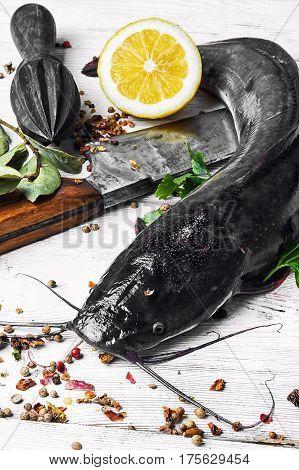 Raw Fish Catfish