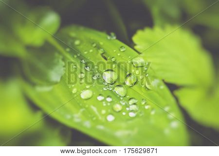 green leaf background in forest in Poland