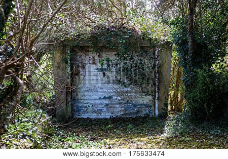Forgotten Garage with trees ivy and undergrowth