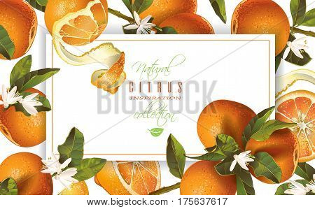 Vector mandarin horizontal banner on white background. Design for sweets and pastries filled with fruit, dessert menu, natural cosmetics, health care products. With place for text