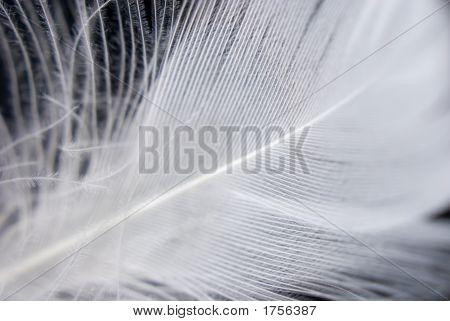 Feather Closeup Series