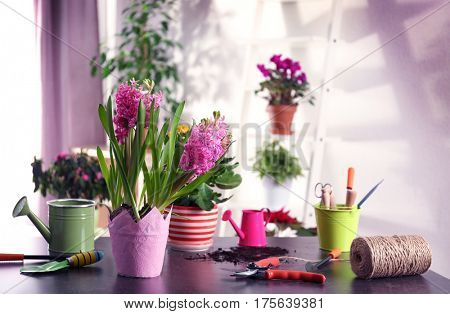 Fresh spring planted flowers on table