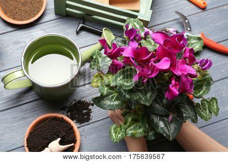 Female gardener planting spring plant at table